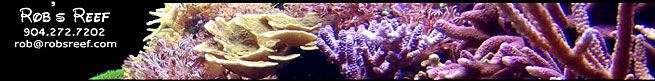 Rob's Reef - High Quality Corals and Zoanthids