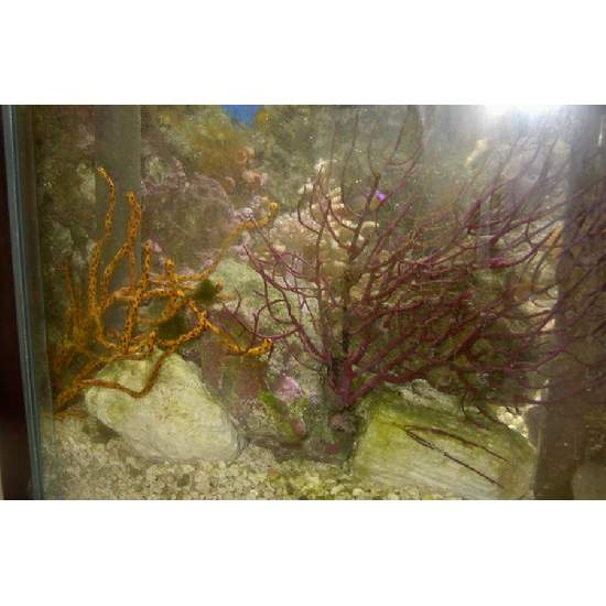 Coral Propagation: Coral Frags, Coral Frag Trading And Coral